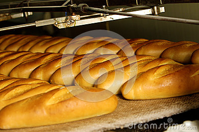 Bread factory, production line