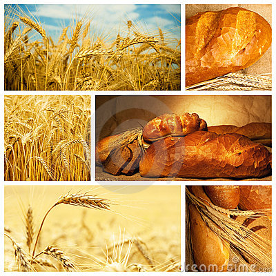 Bread and wheat collage