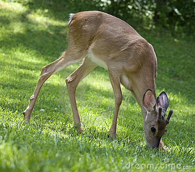 Breakfast buck