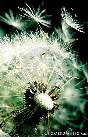Free Breath. Stock Image - 2482871