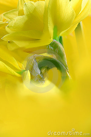 Free Breath Of Spring Stock Photo - 550480