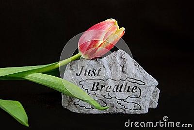 Breathe In Spring