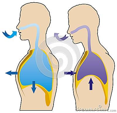 Free Clipart Of Human Anatomy