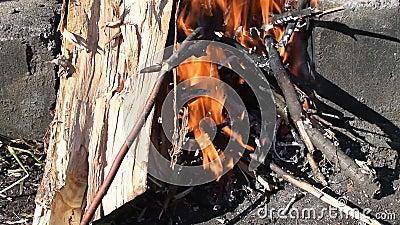 Brennende Zweige in einem Feuer auf die Natur an einem sonnigen Tag stock footage
