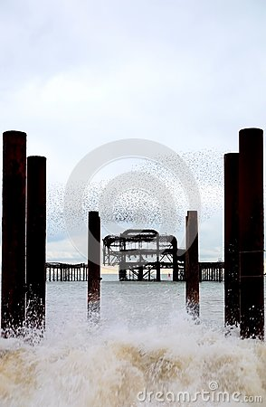 Free Brghton West Pier, Rough Sea, Crashing Wave, Starlings Flying Above Stock Image - 106113561
