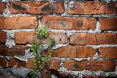 Brick and Branch