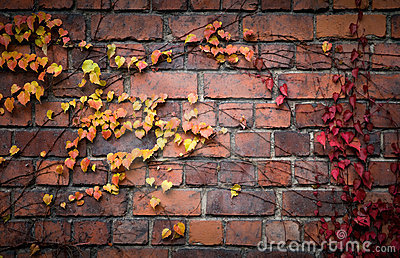 Brick wall with red and yellow autumnal leaves