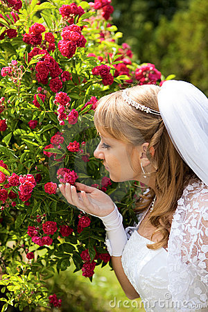 Bride beside a bush of roses