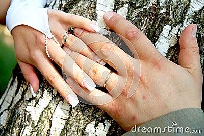 Bride and groom s hands