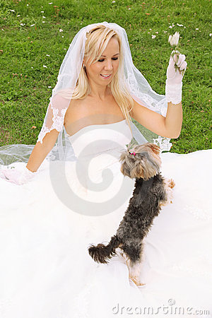 Bride sitting on grass and play with dog