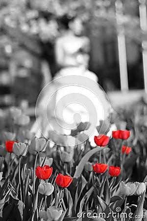 Bride tulips