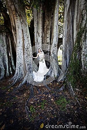 Bride under tree