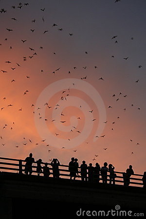 Bridge with bats