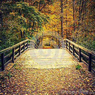 Free Bridge In Autumn Forest Royalty Free Stock Images - 57510719