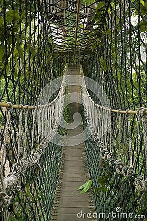 Free Bridge In The Jungle Stock Image - 3577761