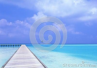 Bridge in maldive