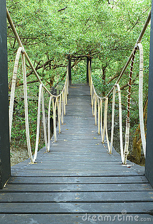 Bridge in mangrove conservation center