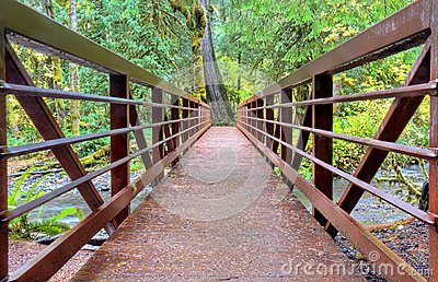 Bridge in rainforest