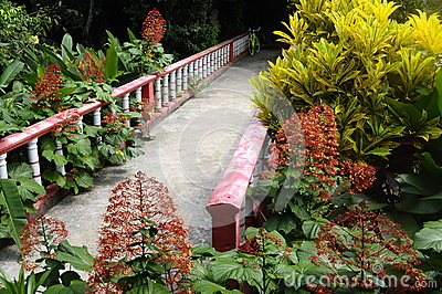 Bridge and red flowers in Tioman