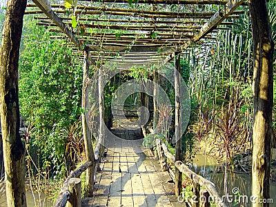 Bridge in thai jungle