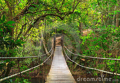 Bridge to the deep jungle