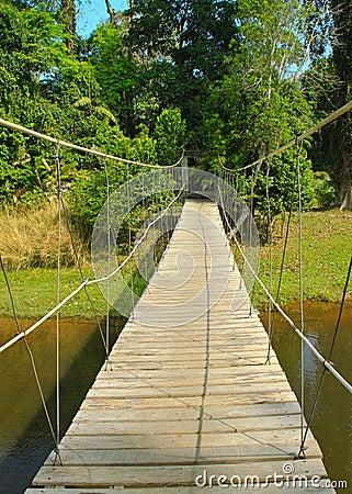 Bridge to the jungle in Thailand