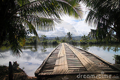 Bridge in tropics