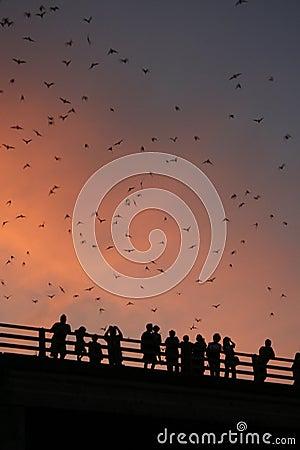 Free Bridge With Bats Stock Photo - 10992640