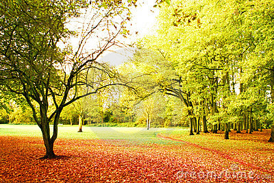 Bright autumn scenery