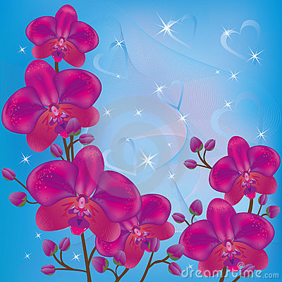 Bright background orchids
