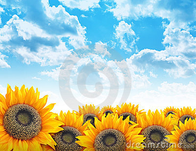 Bright Beautiful Flower Sunflower Background