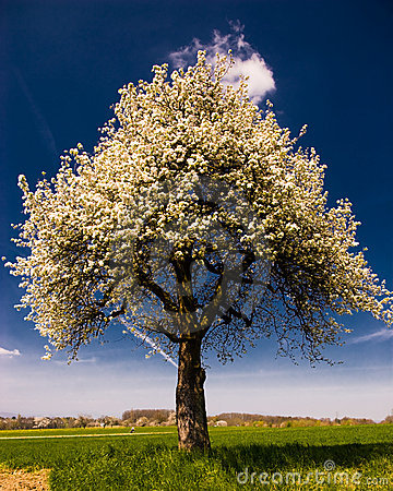 Bright blossoming tree