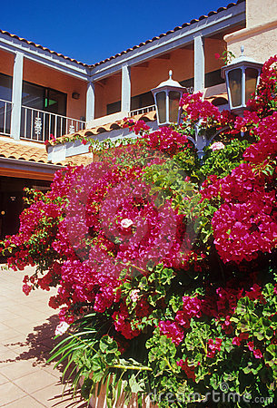 Bright Bougainvillea