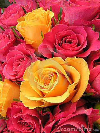 Free Bright Colored Roses Royalty Free Stock Photo - 441225