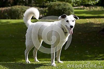 Bright eyed white dog