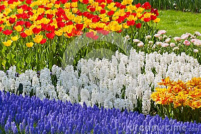 Bright flowerbed