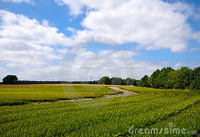 Bright green agriculture farmland