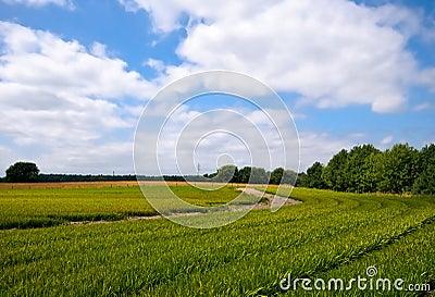 Bright green agriculture farmland