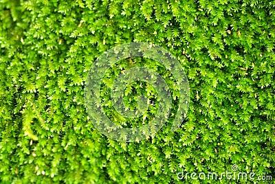 Bright green algae