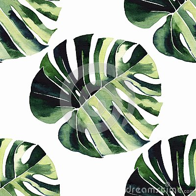 Free Bright Green Herbal Tropical Wonderful Hawaii Floral Summer Pattern Of A Tropic Monstera Palm Leaves Royalty Free Stock Images - 119658009