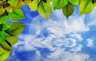 Bright green leaves on blue sky
