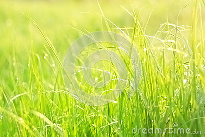 Bright green lush grass