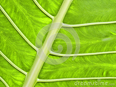 Bright Green Tropical Leaf