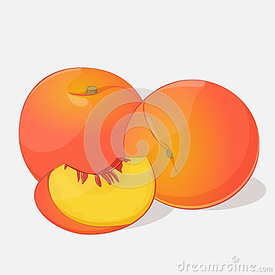 Bright juicy peach on grey background. Sweet delicious for your design in cartoon style. Vector illustration. Fruit Vector Illustration