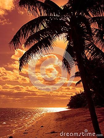 Bright Orange Beach