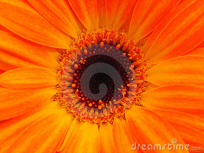 Bright orange flower with copy space