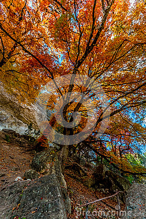 Free Bright Orange Foliage At Lost Maples State Park, Texas Royalty Free Stock Photos - 51447608
