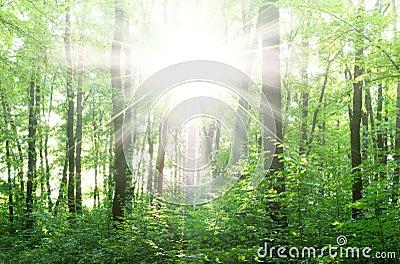 Bright rays