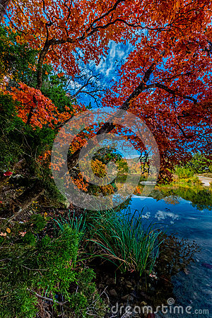 Free Bright Red Leaves Of Lost Maples State Park, Texas Stock Photography - 48264052