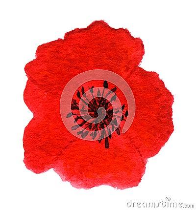Bright Red Poppy